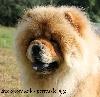 CH. Okouny De los perros de bigo